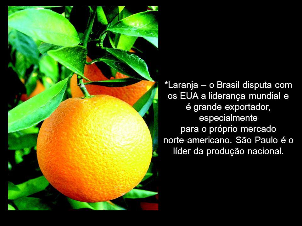 *Laranja – o Brasil disputa com os EUA a liderança mundial e é grande exportador, especialmente para o próprio mercado norte-americano.