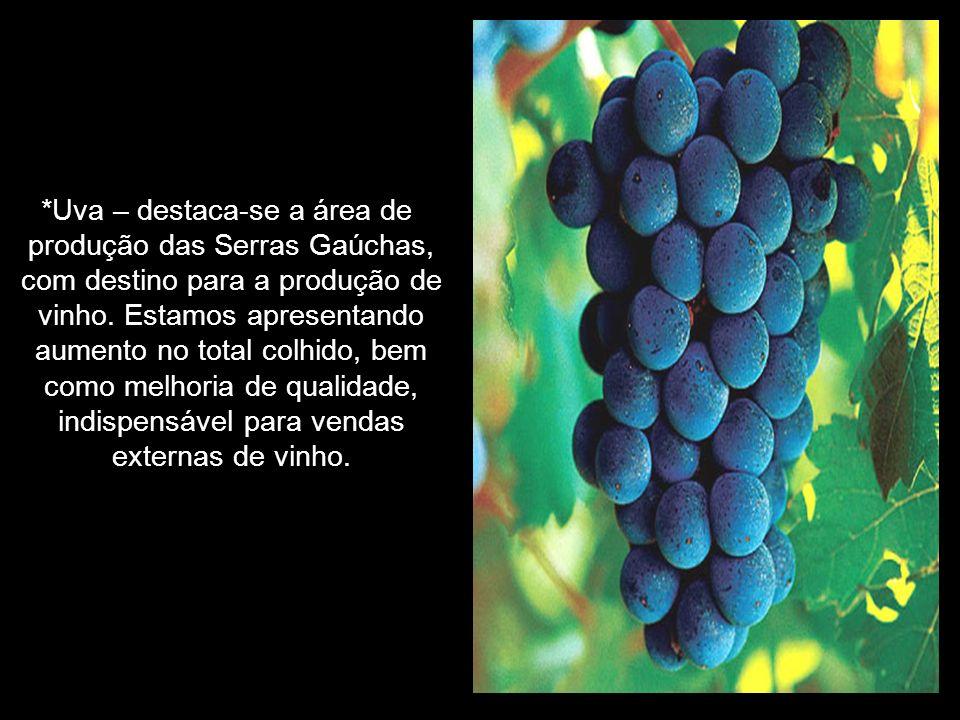 *Uva – destaca-se a área de produção das Serras Gaúchas, com destino para a produção de vinho.