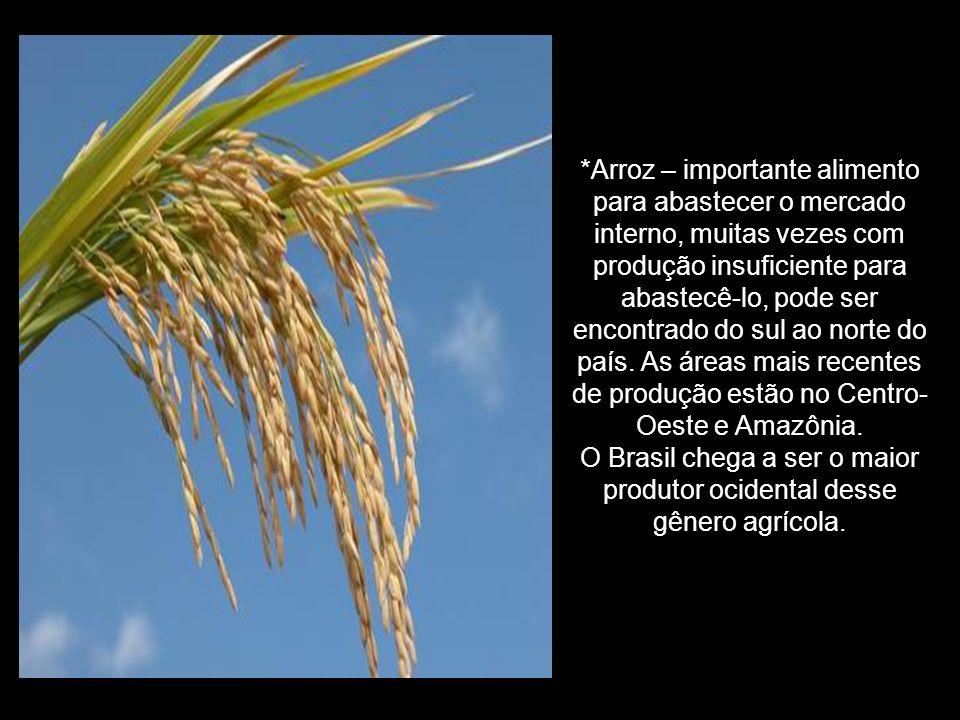 *Arroz – importante alimento para abastecer o mercado interno, muitas vezes com produção insuficiente para abastecê-lo, pode ser encontrado do sul ao norte do país.