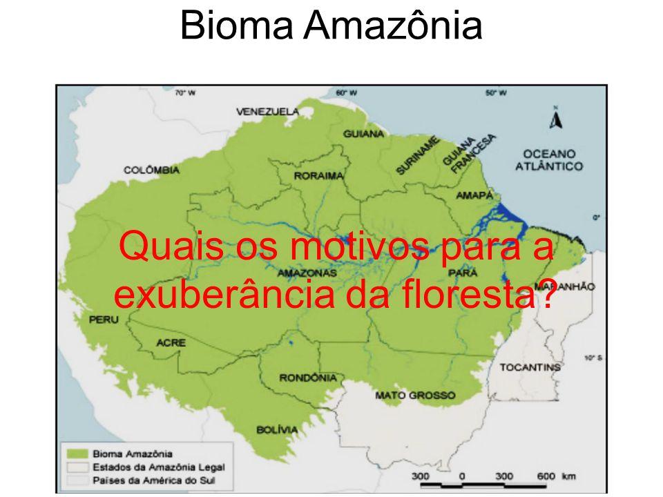 Bioma Amazônia Quais os motivos para a exuberância da floresta?