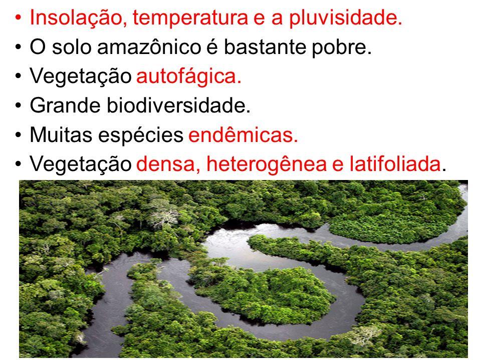 Insolação, temperatura e a pluvisidade. O solo amazônico é bastante pobre. Vegetação autofágica. Grande biodiversidade. Muitas espécies endêmicas. Veg