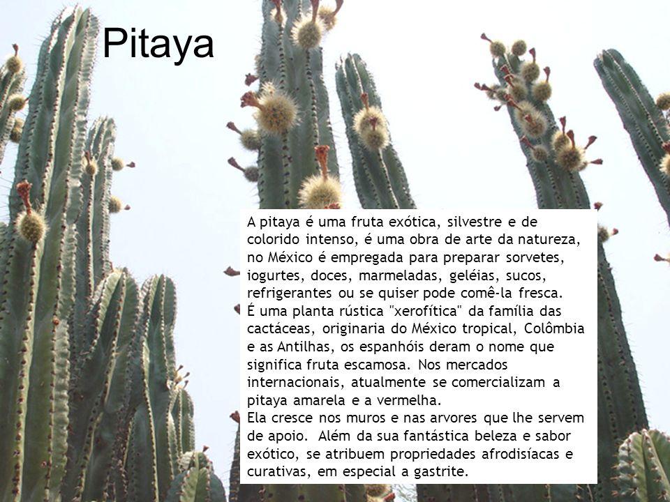 Pitaya A pitaya é uma fruta exótica, silvestre e de colorido intenso, é uma obra de arte da natureza, no México é empregada para preparar sorvetes, iogurtes, doces, marmeladas, geléias, sucos, refrigerantes ou se quiser pode comê-la fresca.