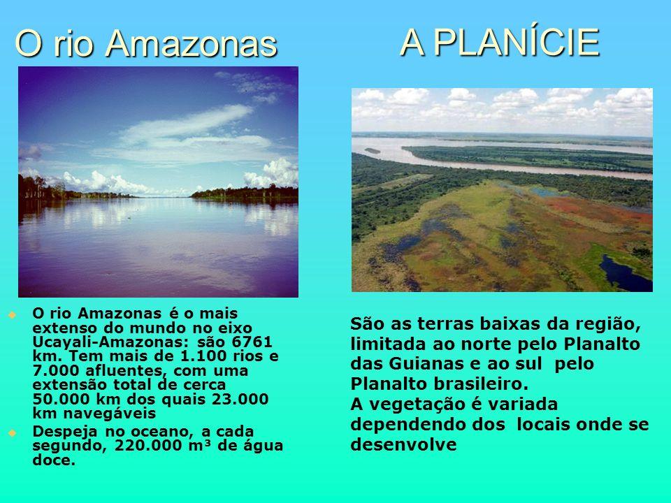 O rio Amazonas O rio Amazonas é o mais extenso do mundo no eixo Ucayali-Amazonas: são 6761 km. Tem mais de 1.100 rios e 7.000 afluentes, com uma exten