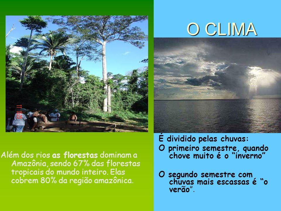 O CLIMA Além dos rios as florestas dominam a Amazônia, sendo 67% das florestas tropicais do mundo inteiro. Elas cobrem 80% da região amazônica. É divi
