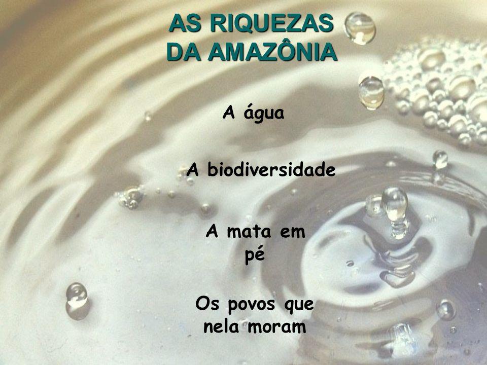 AS RIQUEZAS DA AMAZÔNIA A água A biodiversidade A mata em pé Os povos que nela moram