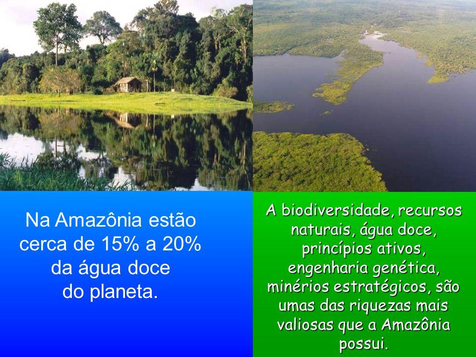 Na Amazônia estão cerca de 15% a 20% da água doce do planeta. A biodiversidade, recursos naturais, água doce, princípios ativos, engenharia genética,