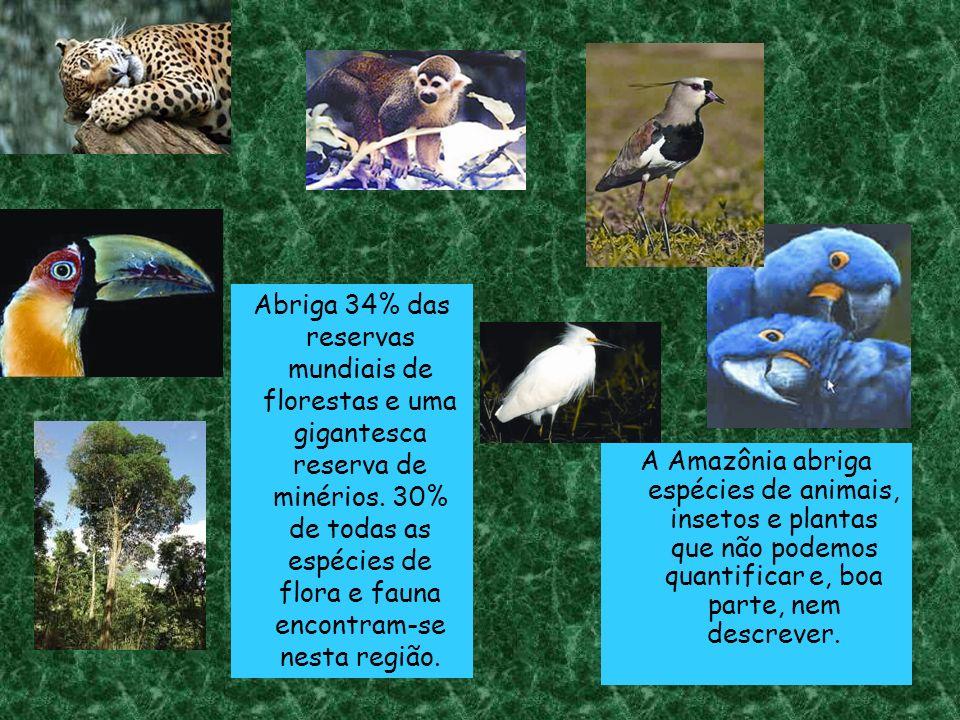 Abriga 34% das reservas mundiais de florestas e uma gigantesca reserva de minérios.