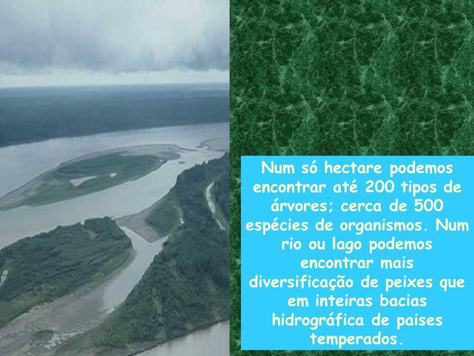 Num só hectare podemos encontrar até 200 tipos de árvores; cerca de 500 espécies de organismos. Num rio ou lago podemos encontrar mais diversificação