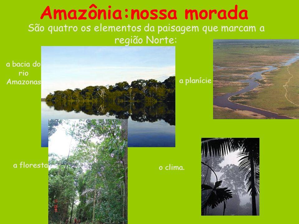 São quatro os elementos da paisagem que marcam a região Norte: o clima. a bacia do rio Amazonas a planície a floresta Amazônia:nossa morada