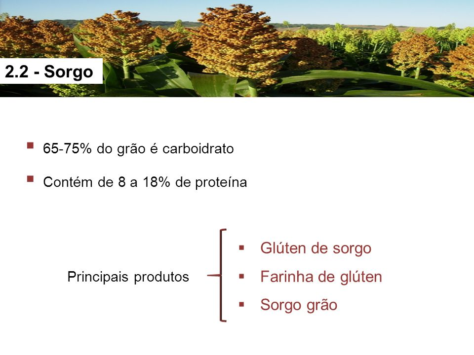 2.2 - Sorgo 65-75% do grão é carboidrato Contém de 8 a 18% de proteína Glúten de sorgo Farinha de glúten Sorgo grão Principais produtos