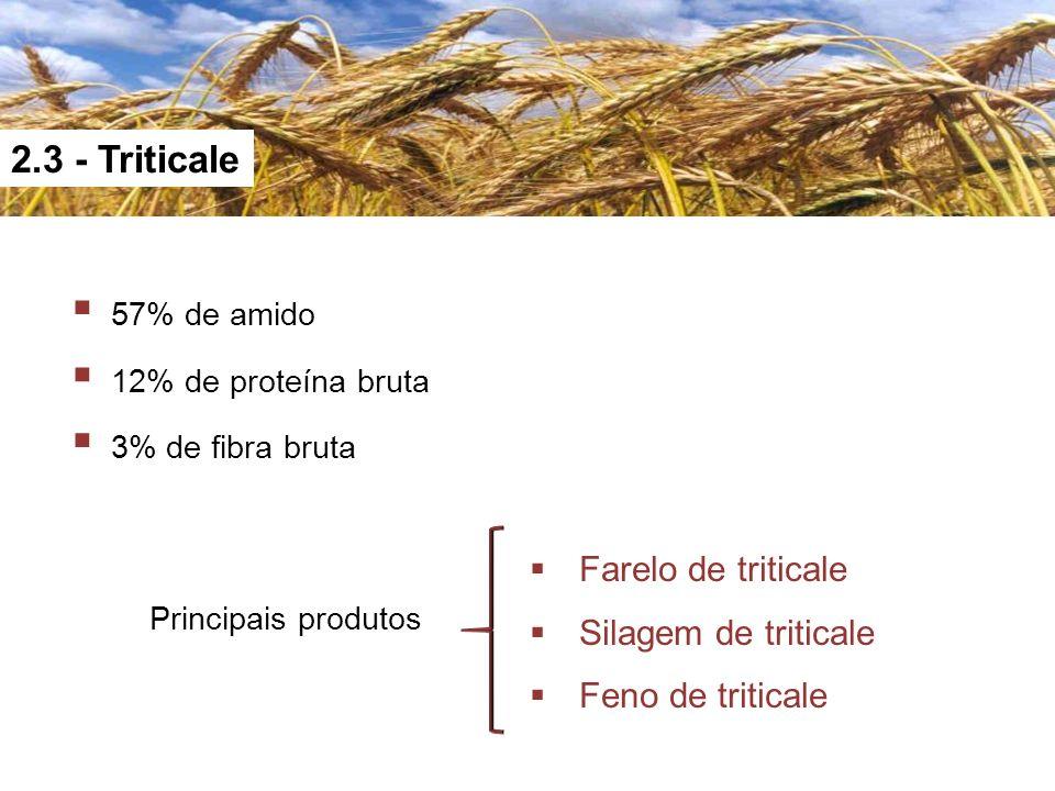 2.3 - Triticale 57% de amido 12% de proteína bruta 3% de fibra bruta Principais produtos Farelo de triticale Silagem de triticale Feno de triticale