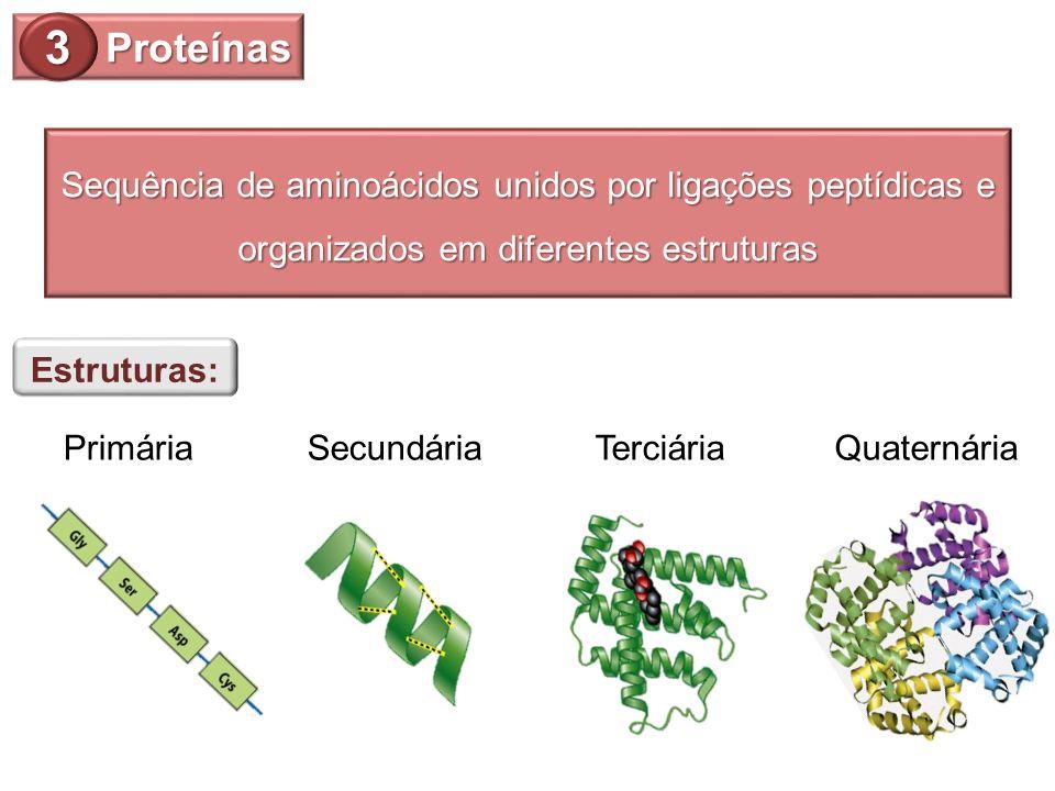 Proteínas 3 Sequência de aminoácidos unidos por ligações peptídicas e organizados em diferentes estruturas Estruturas: PrimáriaSecundáriaTerciáriaQuat
