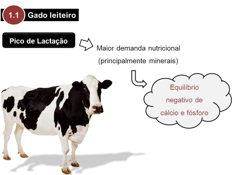 Gado leiteiro 1.1 Pico de Lactação Maior demanda nutricional (principalmente minerais) Equilíbrio negativo de cálcio e fósforo