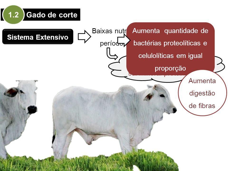Gado de corte 1.2 Sistema Extensivo Baixas nutricionais em períodos de seca Suplementação com sal mineral proteinado Aumenta quantidade de bactérias p