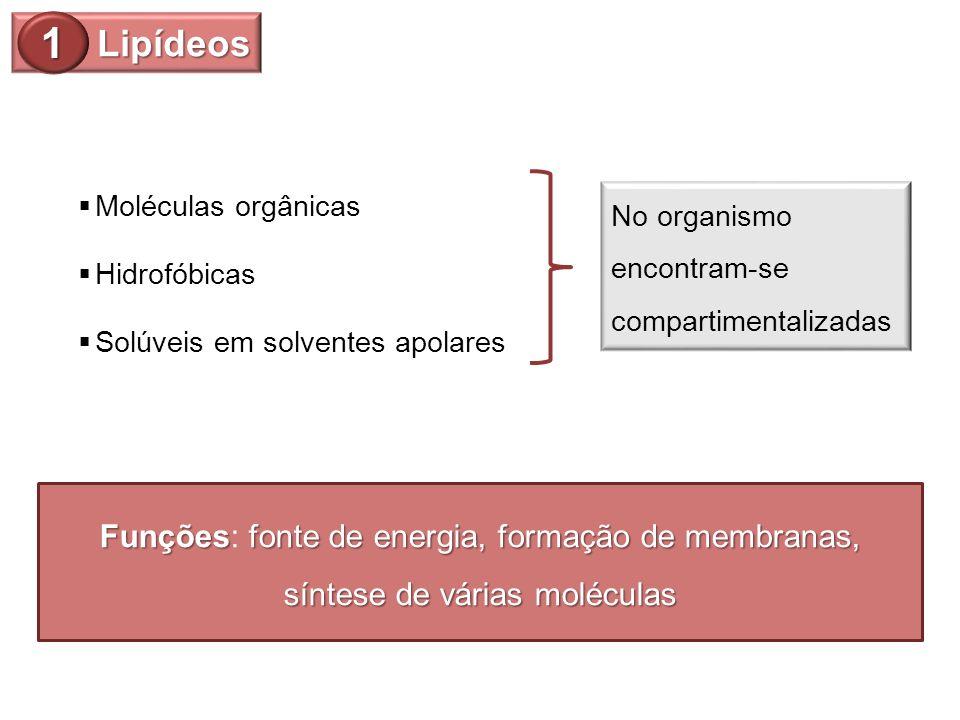 Lipídeos 1 Moléculas orgânicas Hidrofóbicas Solúveis em solventes apolares No organismo encontram-se compartimentalizadas Funçõesfonte de energia, for