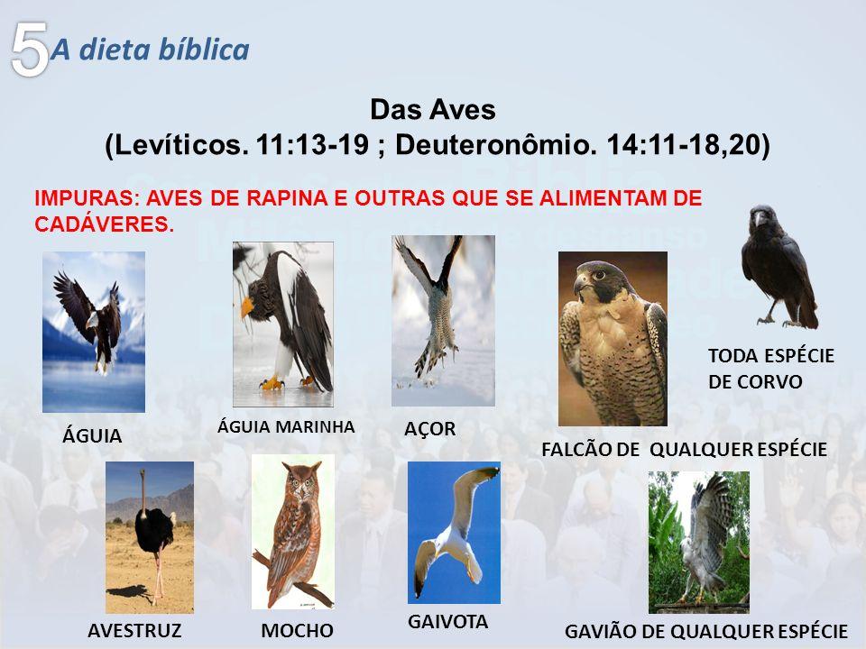A dieta bíblica Das Aves (Levíticos. 11:13-19 ; Deuteronômio. 14:11-18,20) IMPURAS: AVES DE RAPINA E OUTRAS QUE SE ALIMENTAM DE CADÁVERES. ÁGUIA ÁGUIA