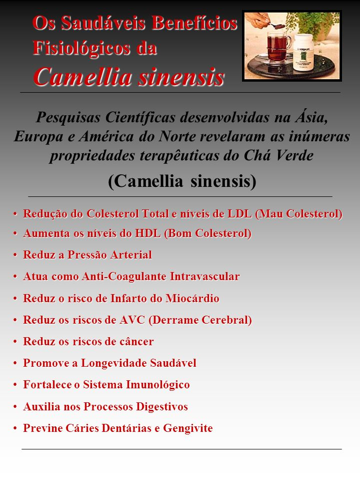 Os Saudáveis Benefícios Fisiológicos da Camellia sinensis Pesquisas Científicas desenvolvidas na Ásia, Europa e América do Norte revelaram as inúmeras propriedades terapêuticas do Chá Verde (Camellia sinensis) Redução do Colesterol Total e níveis de LDL (Mau Colesterol) Redução do Colesterol Total e níveis de LDL (Mau Colesterol) Aumenta os níveis do HDL (Bom Colesterol) Aumenta os níveis do HDL (Bom Colesterol) Reduz a Pressão Arterial Reduz a Pressão Arterial Atua como Anti-Coagulante Intravascular Atua como Anti-Coagulante Intravascular Reduz o risco de Infarto do Miocárdio Reduz o risco de Infarto do Miocárdio Reduz os riscos de AVC (Derrame Cerebral) Reduz os riscos de AVC (Derrame Cerebral) Reduz os riscos de câncer Reduz os riscos de câncer Promove a Longevidade Saudável Promove a Longevidade Saudável Fortalece o Sistema Imunológico Fortalece o Sistema Imunológico Auxilia nos Processos Digestivos Auxilia nos Processos Digestivos Previne Cáries Dentárias e Gengivite Previne Cáries Dentárias e Gengivite