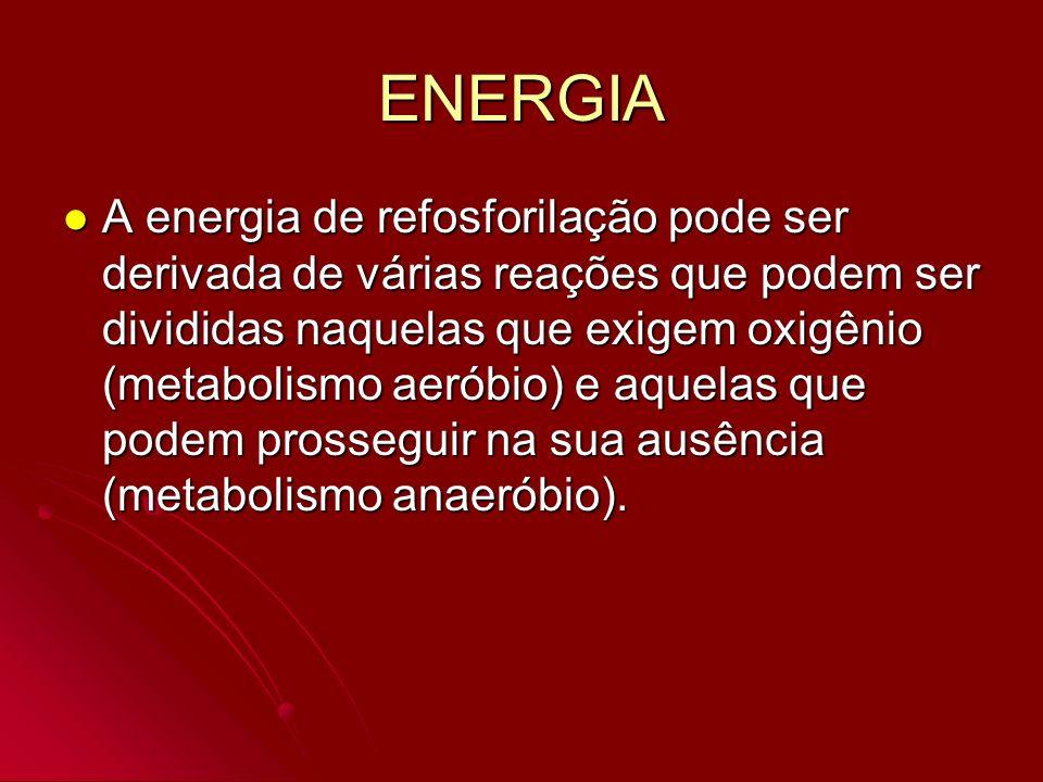ENERGIA A energia de refosforilação pode ser derivada de várias reações que podem ser divididas naquelas que exigem oxigênio (metabolismo aeróbio) e a