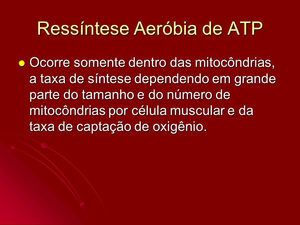 Ressíntese Aeróbia de ATP Ocorre somente dentro das mitocôndrias, a taxa de síntese dependendo em grande parte do tamanho e do número de mitocôndrias