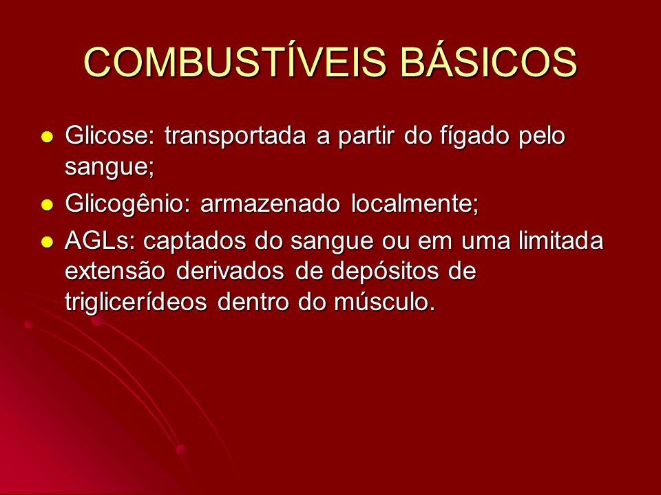 COMBUSTÍVEIS BÁSICOS Glicose: transportada a partir do fígado pelo sangue; Glicose: transportada a partir do fígado pelo sangue; Glicogênio: armazenad