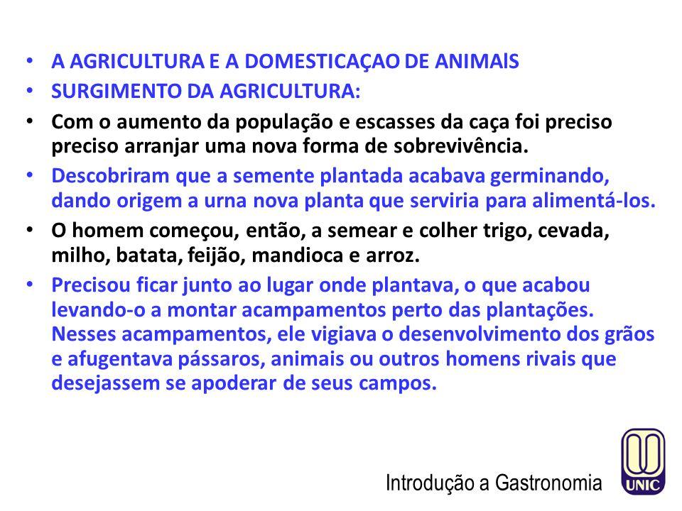 A AGRICULTURA E A DOMESTICAÇAO DE ANIMAlS SURGIMENTO DA AGRICULTURA: Com o aumento da população e escasses da caça foi preciso preciso arranjar uma nova forma de sobrevivência.