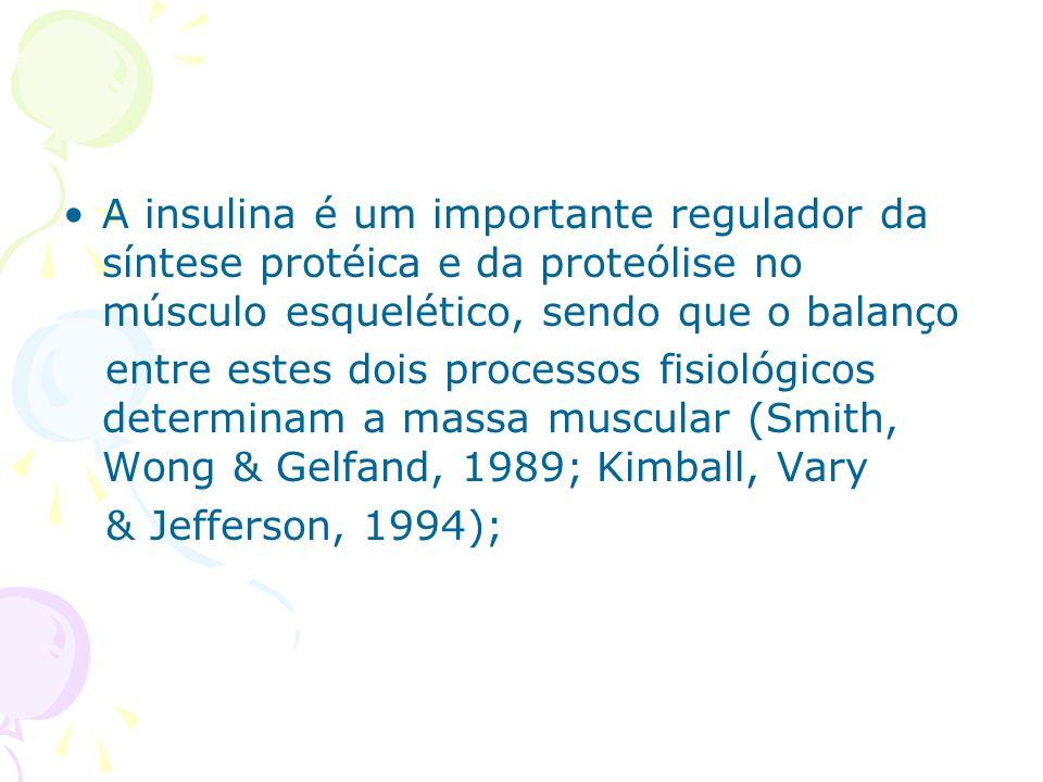 A insulina é um importante regulador da síntese protéica e da proteólise no músculo esquelético, sendo que o balanço entre estes dois processos fisiol