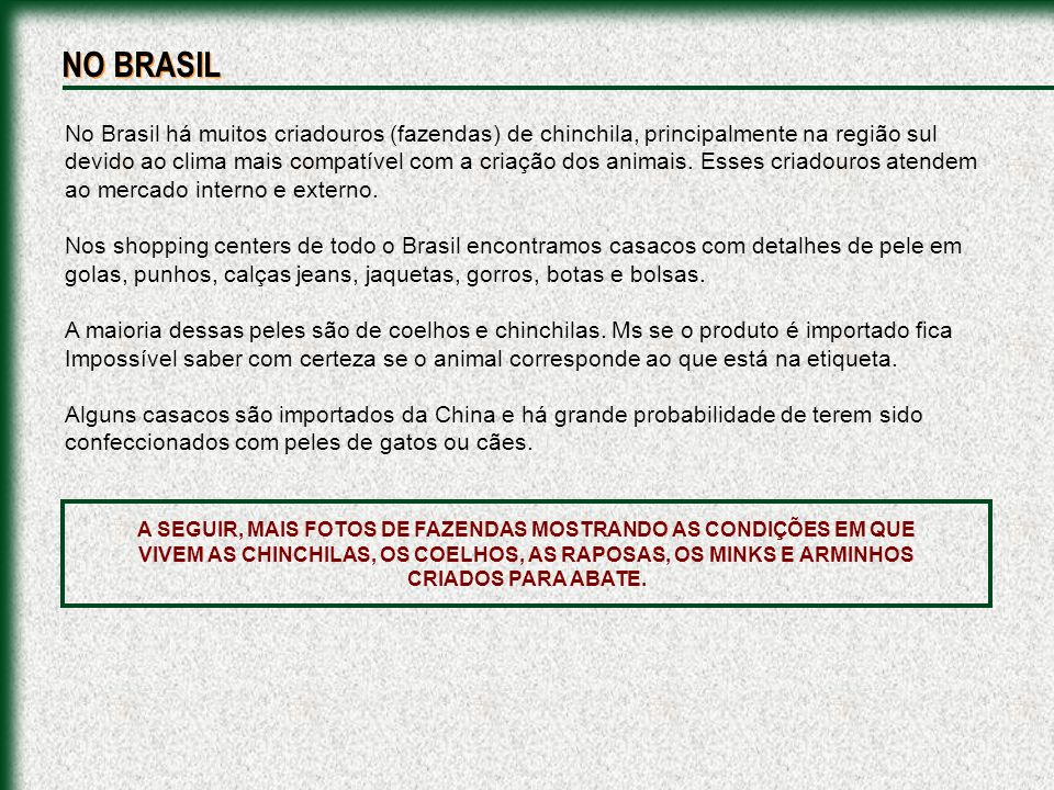 No Brasil há muitos criadouros (fazendas) de chinchila, principalmente na região sul devido ao clima mais compatível com a criação dos animais. Esses