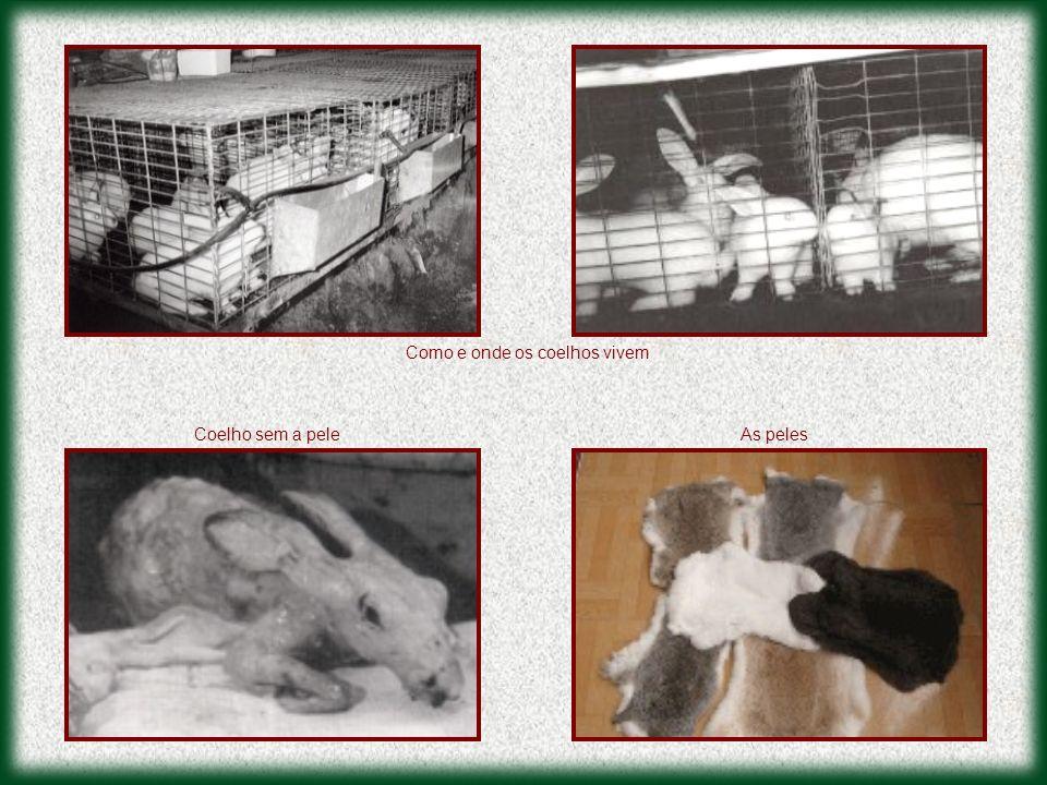 Como e onde os coelhos vivem Coelho sem a peleAs peles