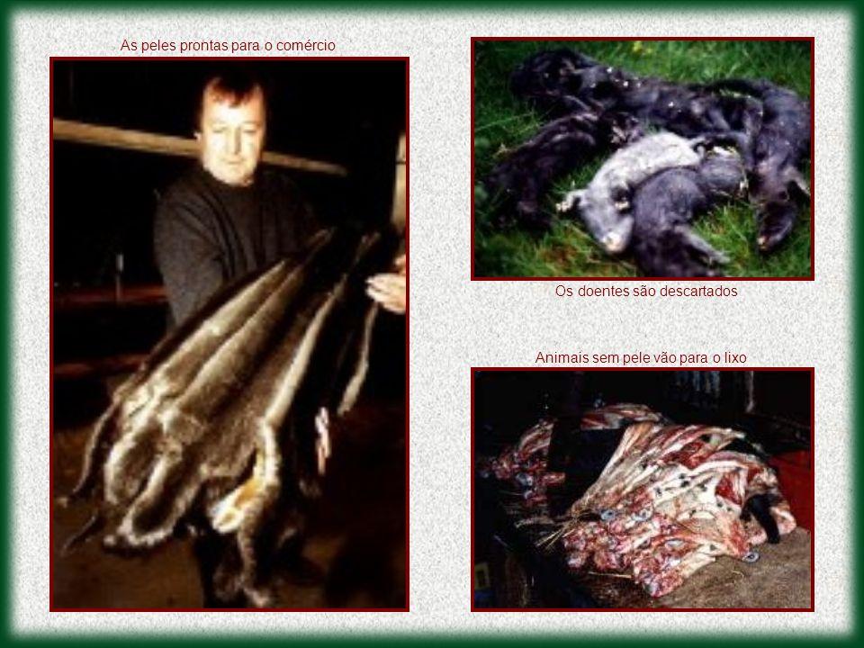 Os doentes são descartados As peles prontas para o comércio Animais sem pele vão para o lixo