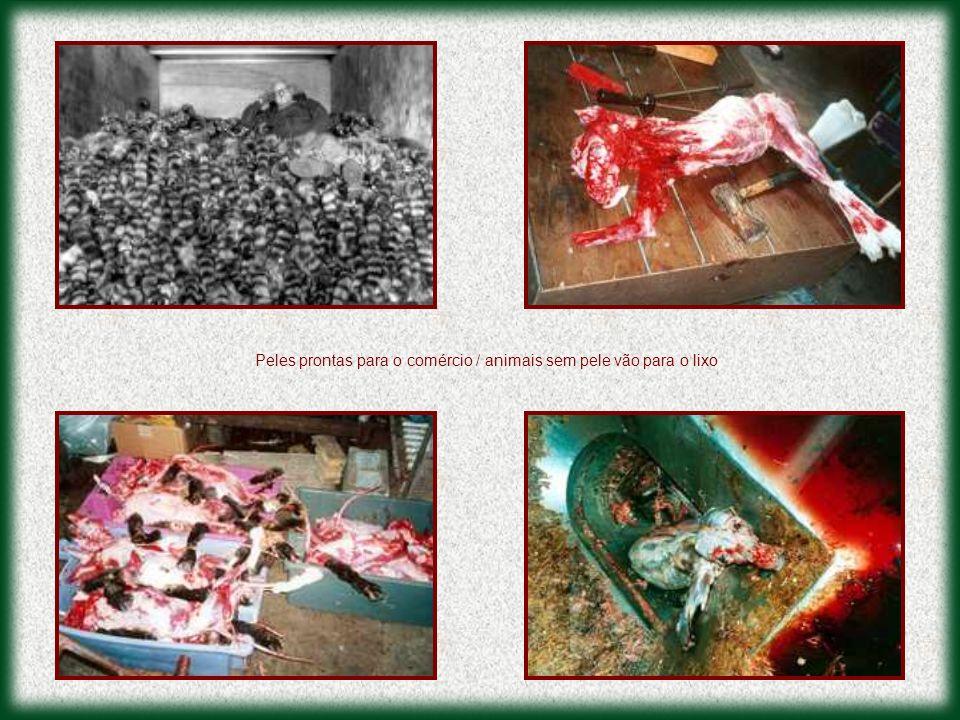 Peles prontas para o comércio / animais sem pele vão para o lixo