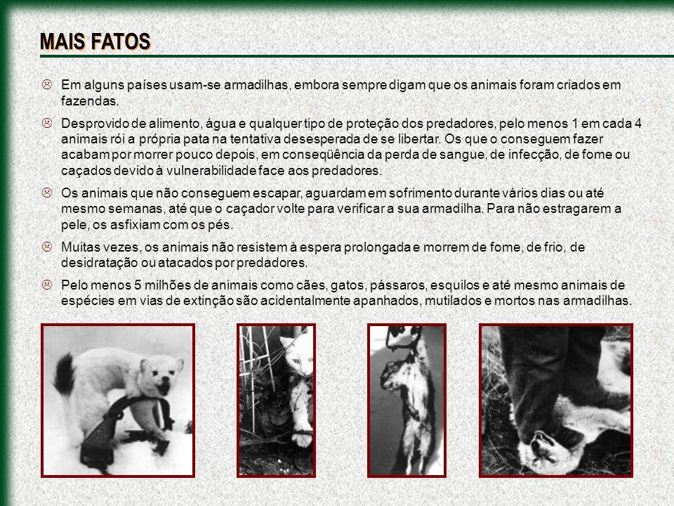 Em alguns países usam-se armadilhas, embora sempre digam que os animais foram criados em fazendas. Desprovido de alimento, água e qualquer tipo de pro