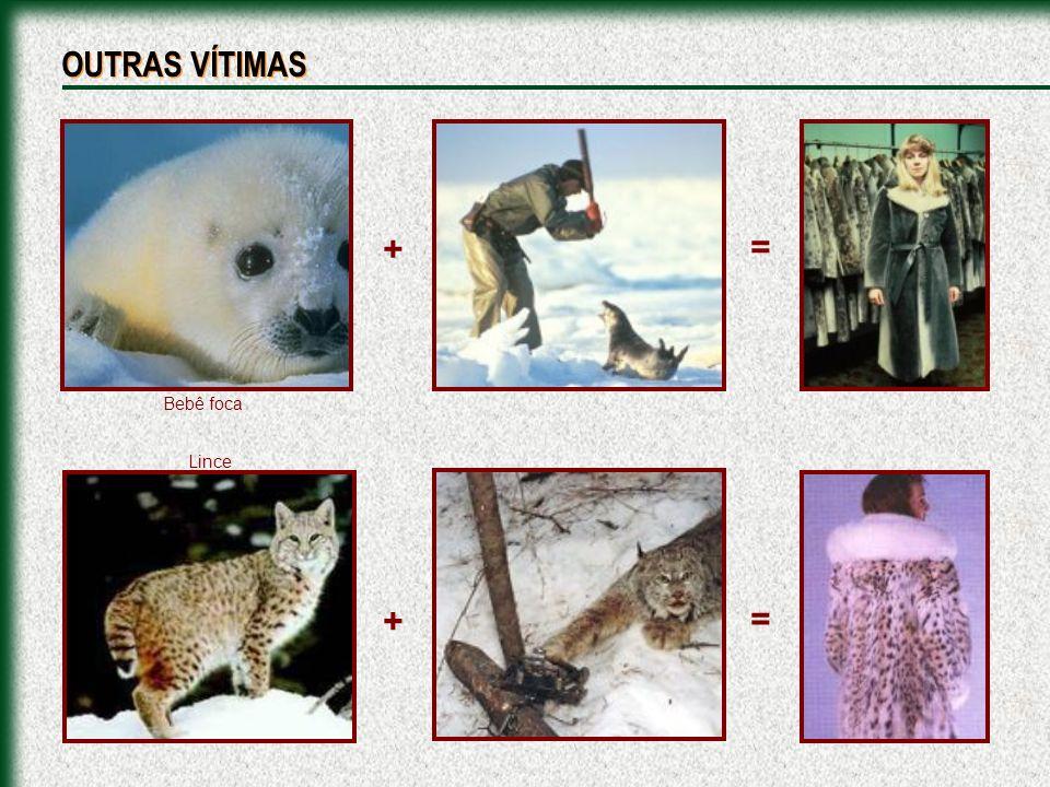 + + = = Bebê foca Lince OUTRAS VÍTIMAS