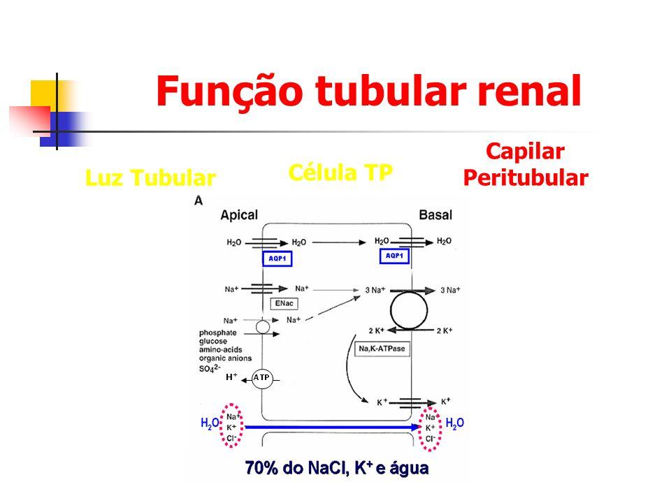 Função tubular renal Capilar Peritubular Célula TP Luz Tubular H+H+