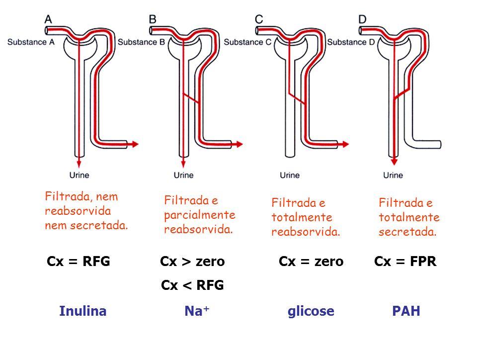 Cx = RFG Cx > zero Cx = zero Cx = FPR Cx < RFG Filtrada, nem reabsorvida nem secretada. Filtrada e parcialmente reabsorvida. Filtrada e totalmente rea