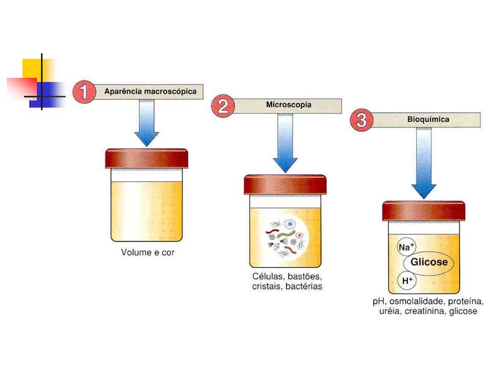 Novos Métodos beta-2 microglobulina, proteína transportadora de retinol (RBP) Cistatina C Iohexol