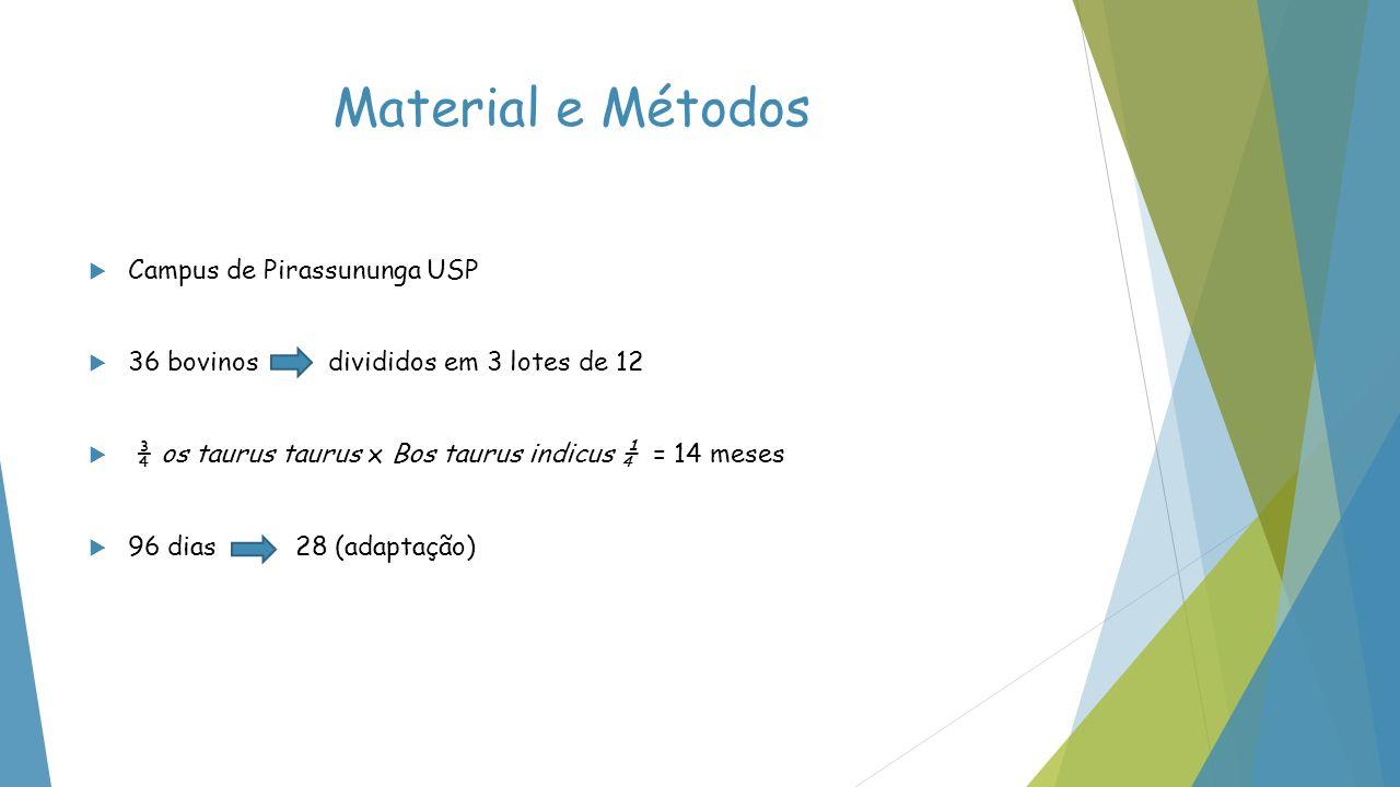 Material e Métodos Campus de Pirassununga USP 36 bovinos divididos em 3 lotes de 12 ¾ os taurus taurus x Bos taurus indicus ¼ = 14 meses 96 dias 28 (a