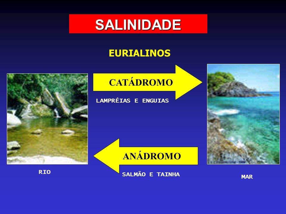 SALINIDADE EURIALINOS RIO MAR CATÁDROMO ANÁDROMO LAMPRÉIAS E ENGUIAS SALMÃO E TAINHA
