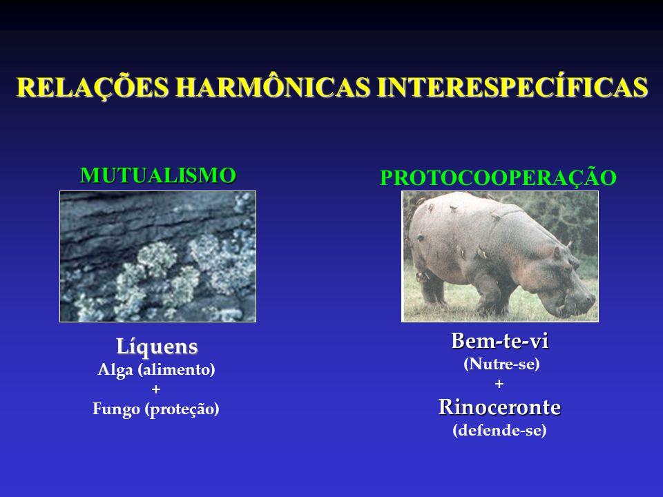 RELAÇÕES HARMÔNICAS INTERESPECÍFICAS MUTUALISMO PROTOCOOPERAÇÃO Líquens Alga (alimento) + Fungo (proteção)Bem-te-vi (Nutre-se) + Rinoceronte Rinoceron