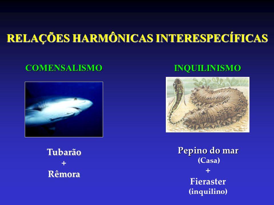 RELAÇÕES HARMÔNICAS INTERESPECÍFICAS COMENSALISMO INQUILINISMO Tubarão +Rêmora Pepino do mar (Casa) + Fieraster (inquilino)