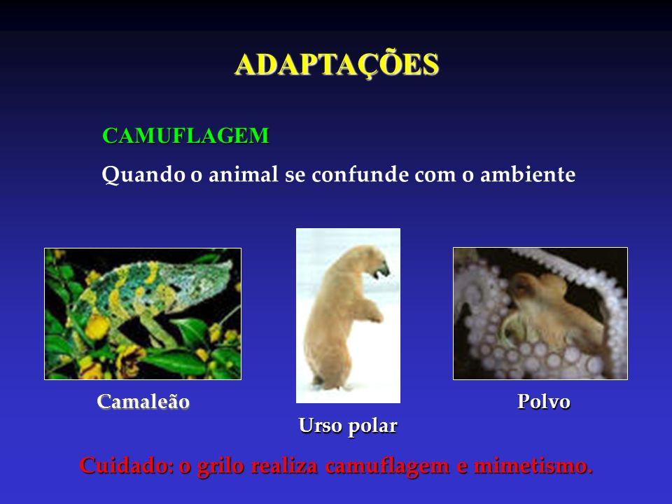CAMUFLAGEM Quando o animal se confunde com o ambiente Camaleão Urso polar Polvo Cuidado: o grilo realiza camuflagem e mimetismo. ADAPTAÇÕES