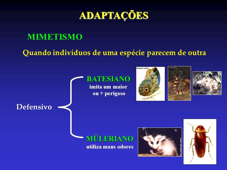 MIMETISMO Quando indivíduos de uma espécie parecem de outra Defensivo BATESIANO BATESIANO imita um maior ou + perigoso MÜLERIANO MÜLERIANO utiliza mau