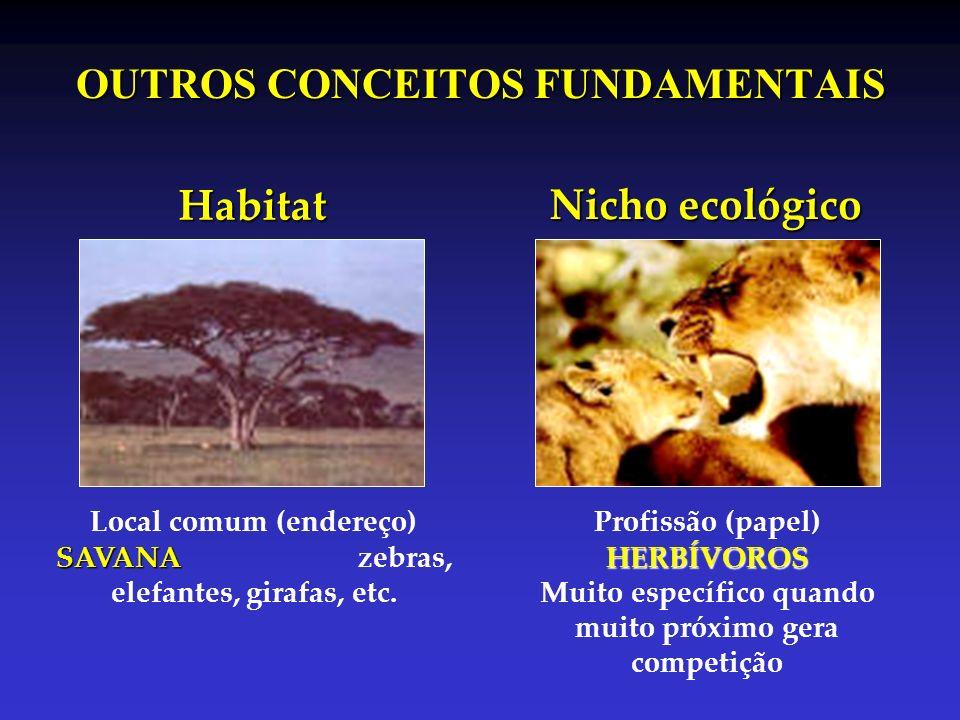 OUTROS CONCEITOS FUNDAMENTAIS Habitat SAVANA Local comum (endereço) SAVANA zebras, elefantes, girafas, etc. HERBÍVOROS Profissão (papel) HERBÍVOROS Mu