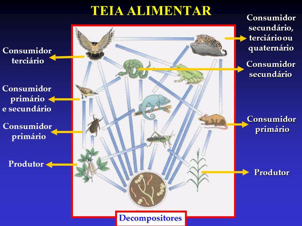 PIRÂMIDES ECOLÓGICAS Pirâmides de Números Capim Gafanhoto Pardal Cobra Pirâmide normal Árvore Cupins Parasitas Pirâmide invertida Representa a quantidade de indivíduos em cada nível trófico da cadeia alimentar proporcionalmente à quantidade necessária para a dieta de cada um desses.