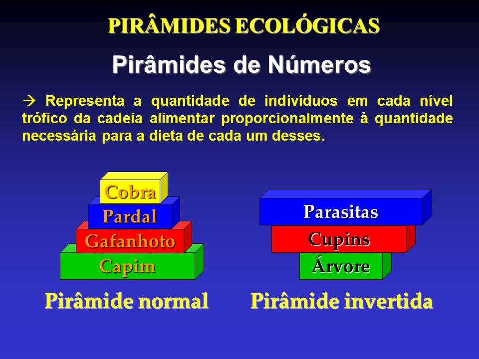 PIRÂMIDES ECOLÓGICAS Pirâmides de Números Capim Gafanhoto Pardal Cobra Pirâmide normal Árvore Cupins Parasitas Pirâmide invertida Representa a quantid
