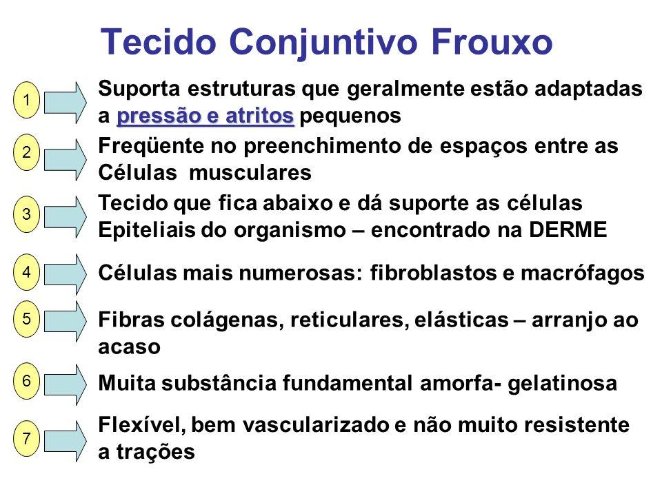 Tecido Conjuntivo Frouxo Suporta estruturas que geralmente estão adaptadas pressão e atritos a pressão e atritos pequenos Freqüente no preenchimento d