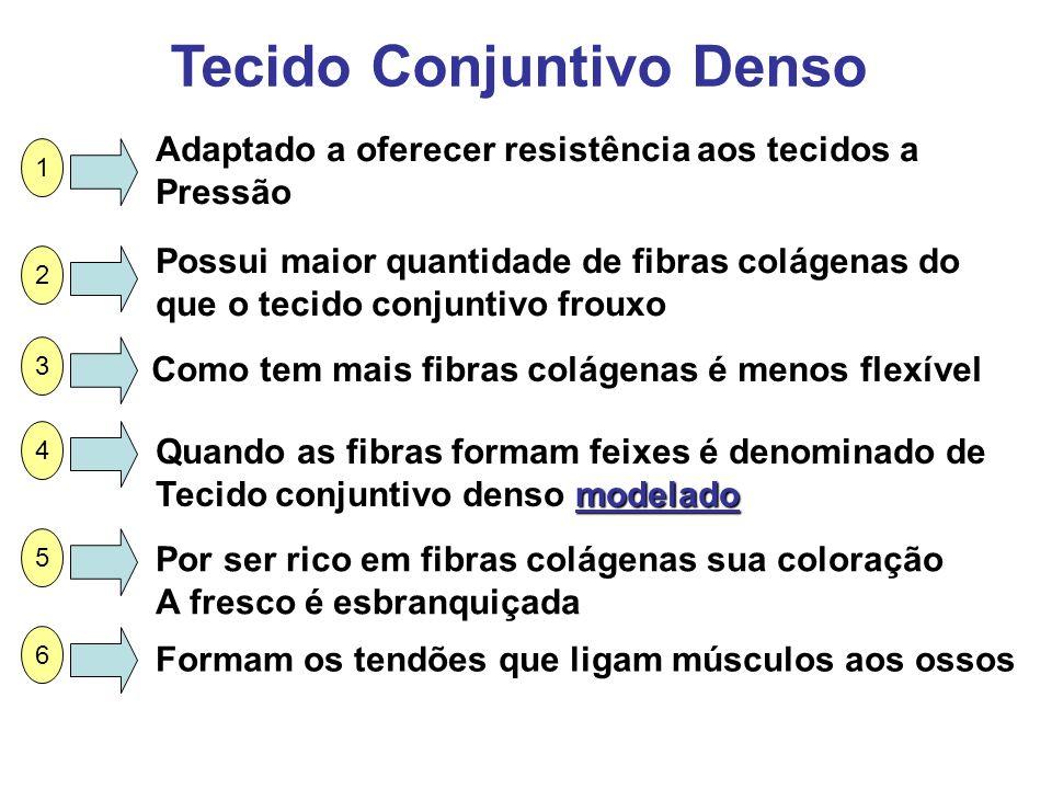 Tecido Conjuntivo Denso Adaptado a oferecer resistência aos tecidos a Pressão Possui maior quantidade de fibras colágenas do que o tecido conjuntivo f
