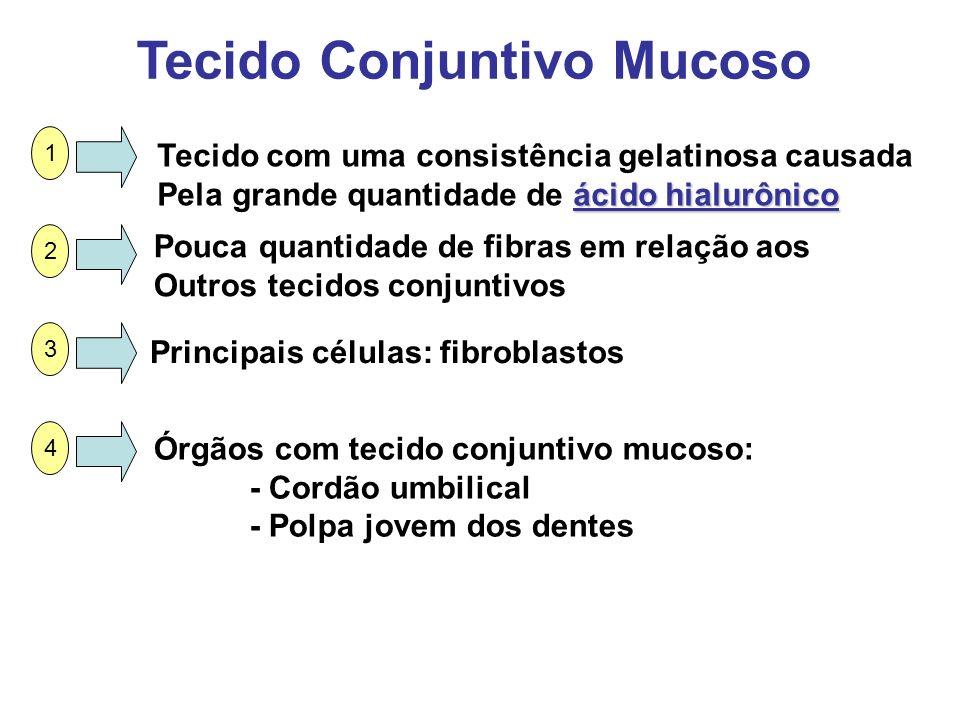 Tecido Conjuntivo Mucoso Tecido com uma consistência gelatinosa causada ácido hialurônico Pela grande quantidade de ácido hialurônico Pouca quantidade