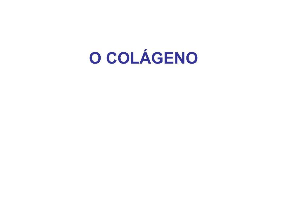 O COLÁGENO