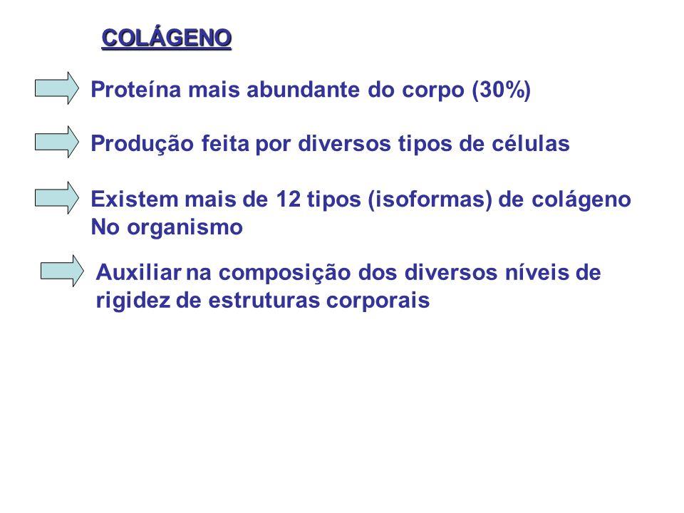 Proteína mais abundante do corpo (30%) COLÁGENO Produção feita por diversos tipos de células Existem mais de 12 tipos (isoformas) de colágeno No organ