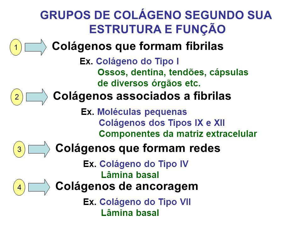 GRUPOS DE COLÁGENO SEGUNDO SUA ESTRUTURA E FUNÇÃO 1 Colágenos que formam fibrilas Ex. Colágeno do Tipo I Ossos, dentina, tendões, cápsulas de diversos